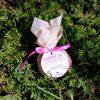 BRUSNIKA гейзер Розовый сад